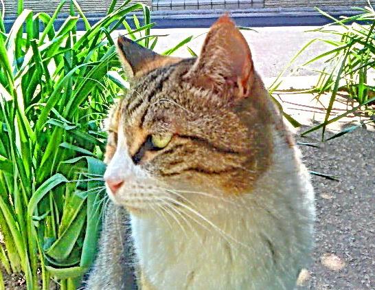 しなやかな猫らしい動き、運動神経抜群の初代ミーちゃん