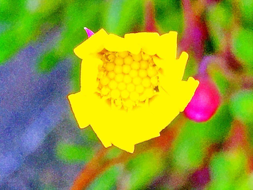 ルビーネックレスの長い花柄の先に付くキク科らしい黄色い花